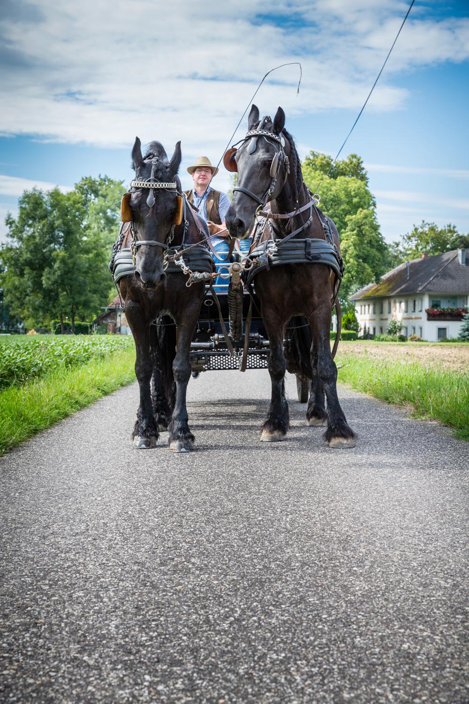 Stadlmayr Kutschenfahrten