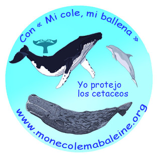Lien Mon Ecole Ma Baleine