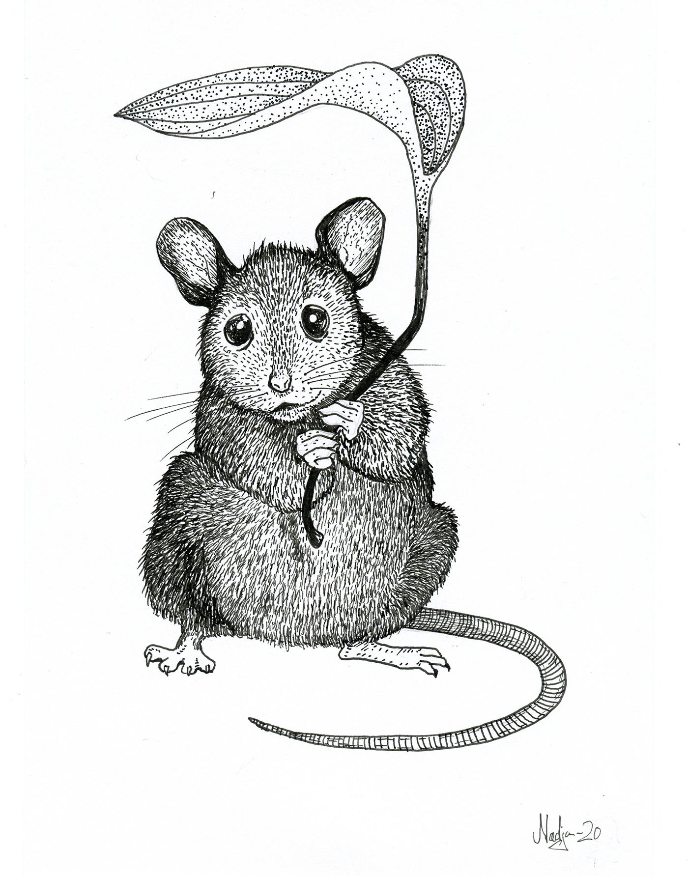 mouse_web