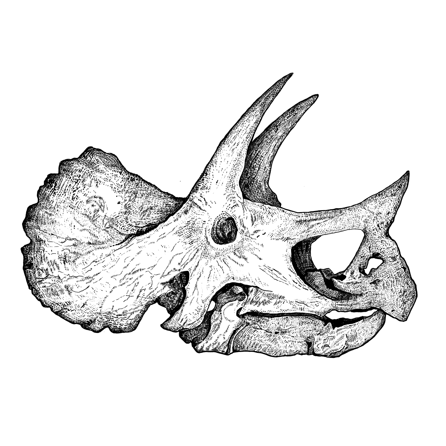 triceratops_web