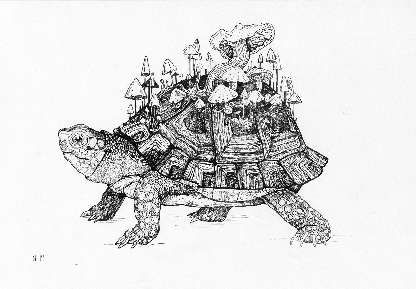tortoise_nadja-art