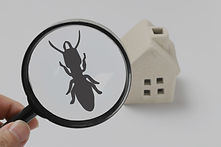 Home%20and%20termite_edited.jpg