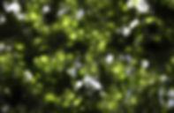 Estampa_forest.jpg
