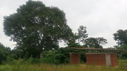 sdoğal mimari