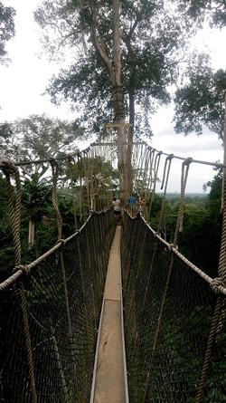canopy ghana