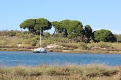 Ria Formosa (near the village)