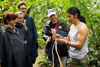 JungleTour.jpg