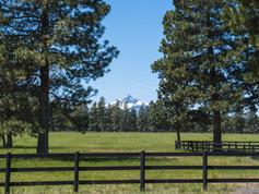 Mt. Washington across the pasture