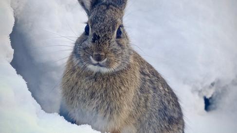 Bunny cuteness