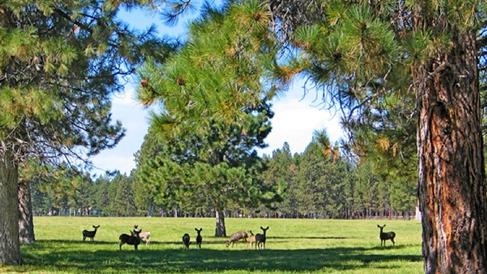 Deer herd in the pasture