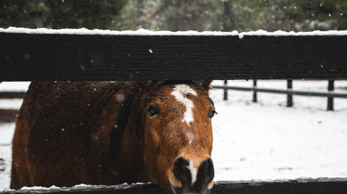 Hey everyone, it's snowing in my paddock