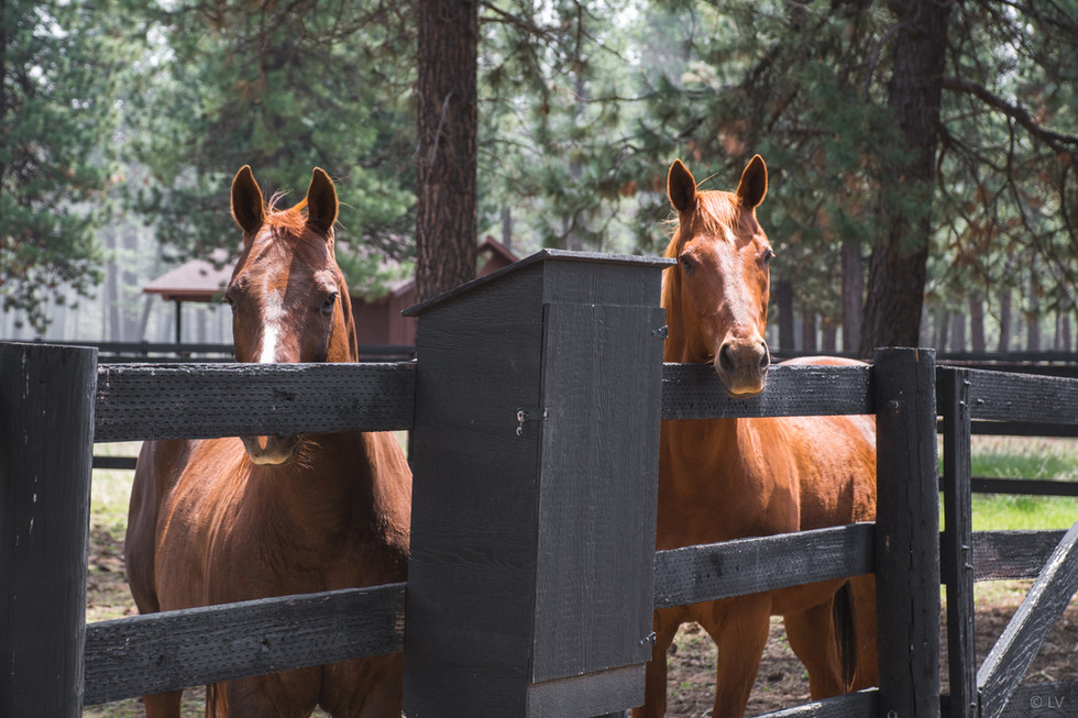 Curious horses in their paddock