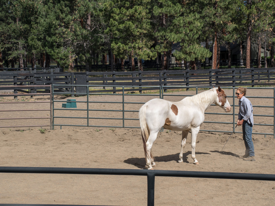 Joey the paint and friend in the round pen