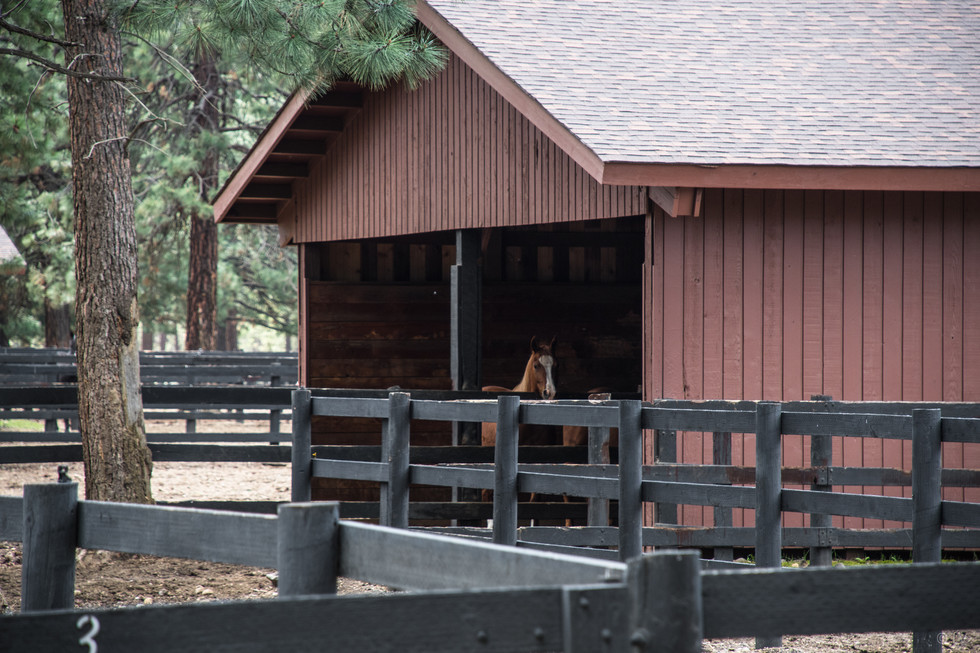 Paddock with shelter