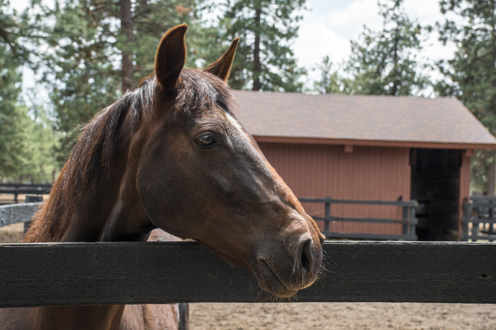 Horse in paddock with shelter in background