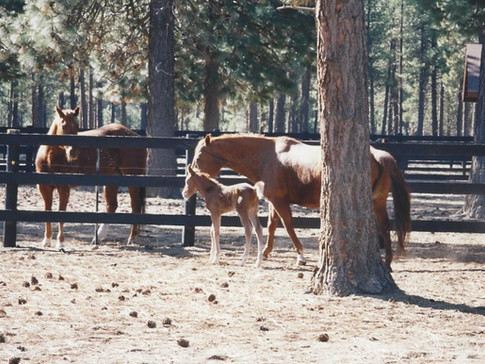 Cinnamon and her foal with a neigh-bor
