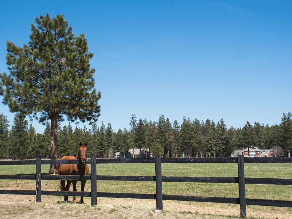 Horse in central pasture
