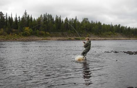 Flue fisker 5.jpg