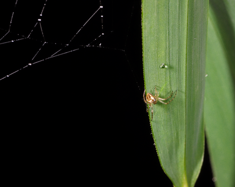 Macro Spider.tif
