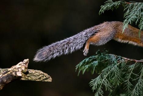 Squirrel.tif