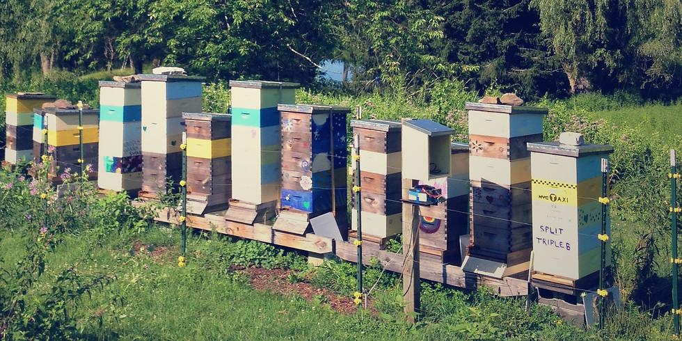 Honeybee Hive Painting