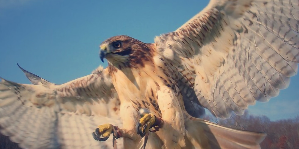 Potluck & Workshop: Falcons and Farm Wildlife