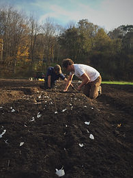 Garlic Planting Work Day