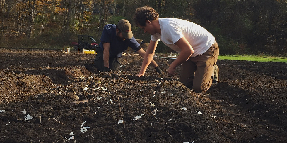 Garlic Planting Work Day