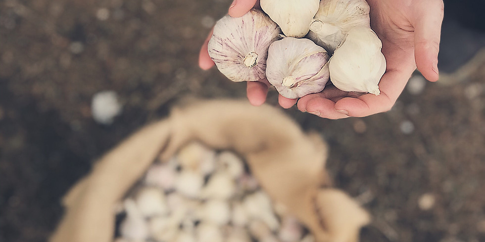 History of Garlic: A Tale and Tasting