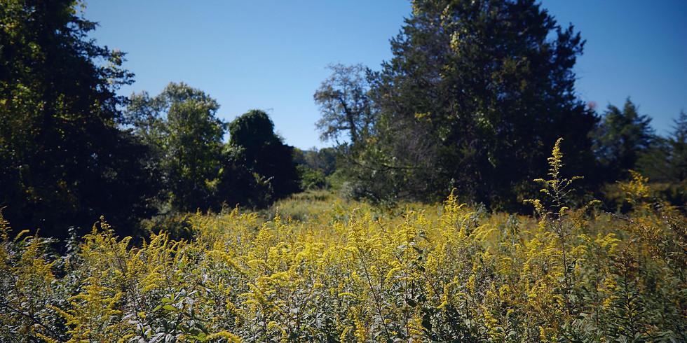 Solstice Wildlife Walk