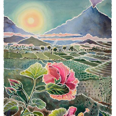 9. Dawn Hibiscus, 54x45cm