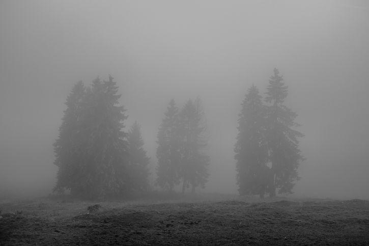 trees, schwitzerlandorfrance.jpg