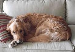 Dog Overnigh