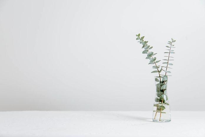 Eucalyptus Plant to Symbolize Therapy.jpg