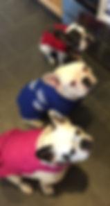 Robert's bulldogs