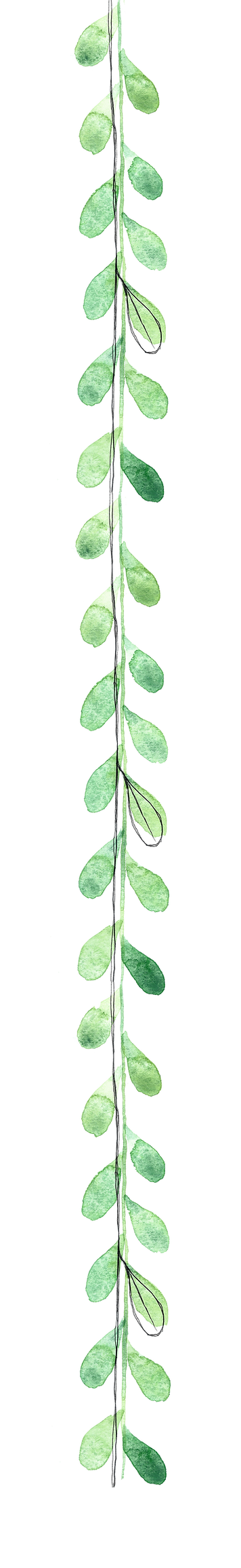 vines for website.png