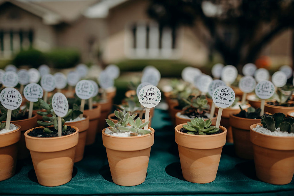 succulents in terra cotta pots are shower favors for driveway bridal shower