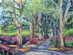 Savannah Stroll