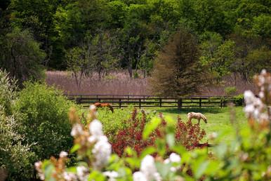 Horse grazing  (1 of 1)-2.jpg
