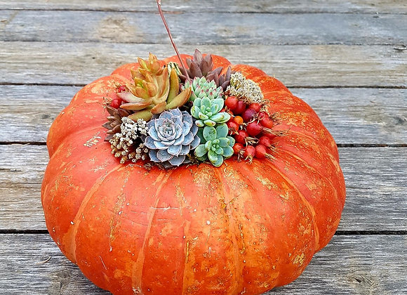 Awesome pumpkin with succulents
