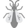 020-insect-4 (1).png