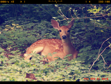 A Reference for Deer Resistant Plants