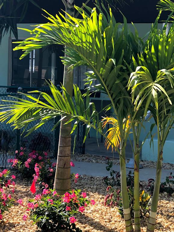 photo of palm trees around pool