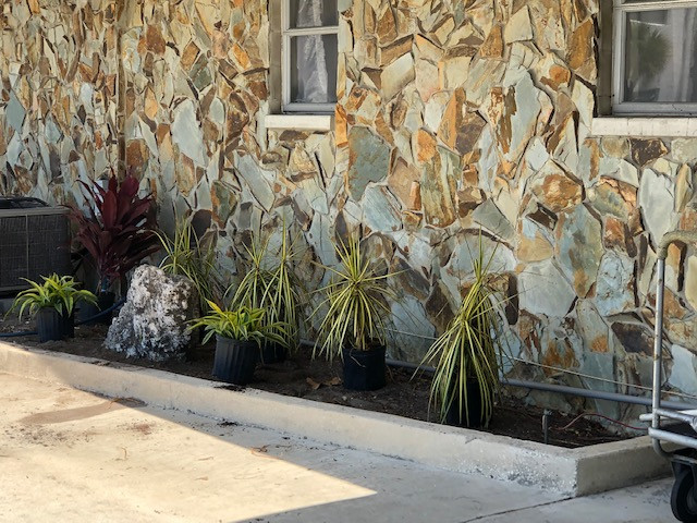 Spikey plants in pots getting ready to be planted in the front of stone wall in front of building
