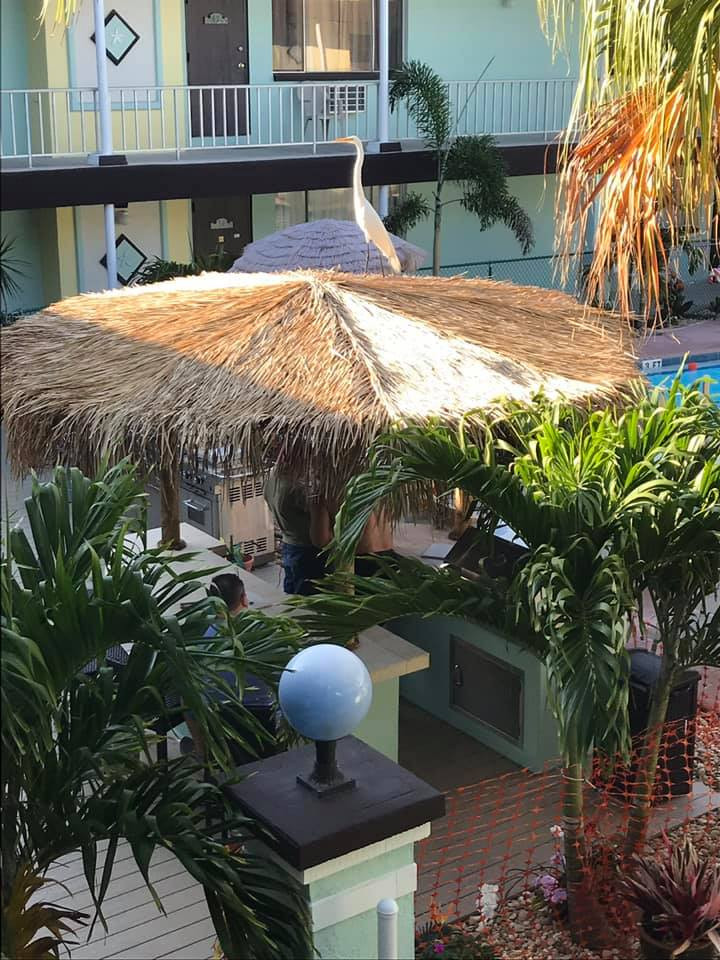 Looking down on Tiki Hut with Egret on the roof