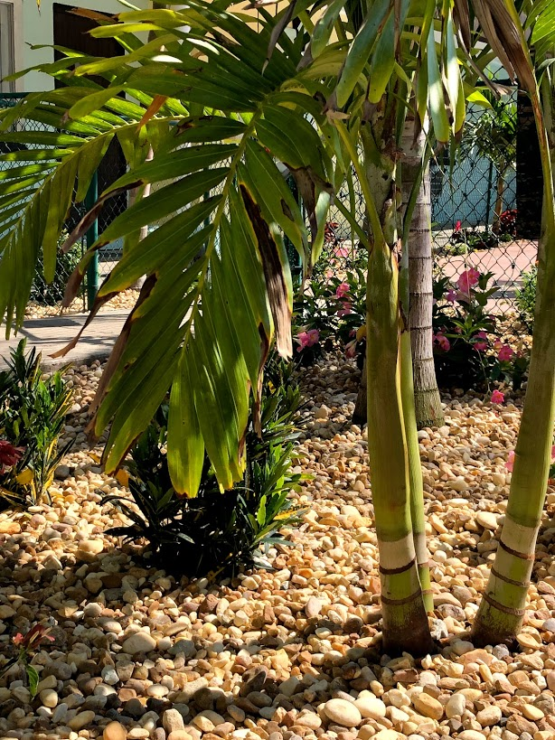 Photo of landscape stone, flowers and palm tree