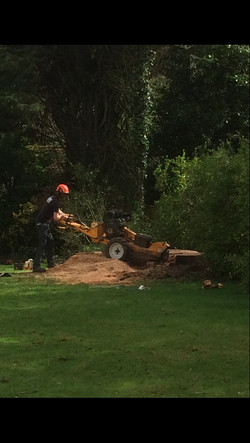 stump grinding ottery st mary