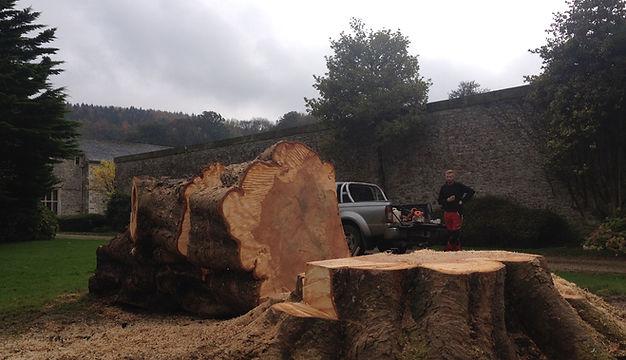 Tree Surgery | Wilmington, East Devon