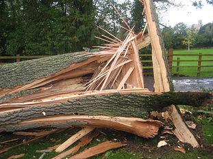 Emergency tree surgery | Rockbeare, East Devon