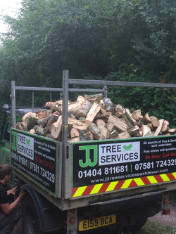 Oak logs West Hill East Devon